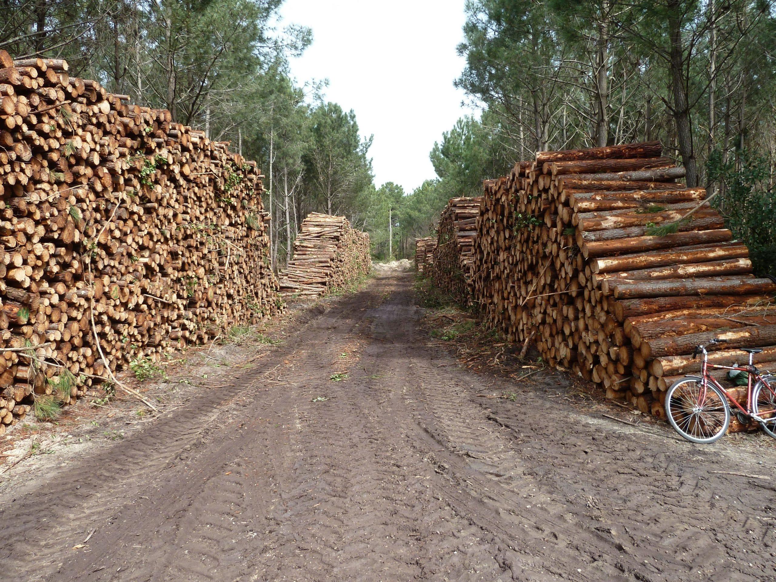 timber work injury