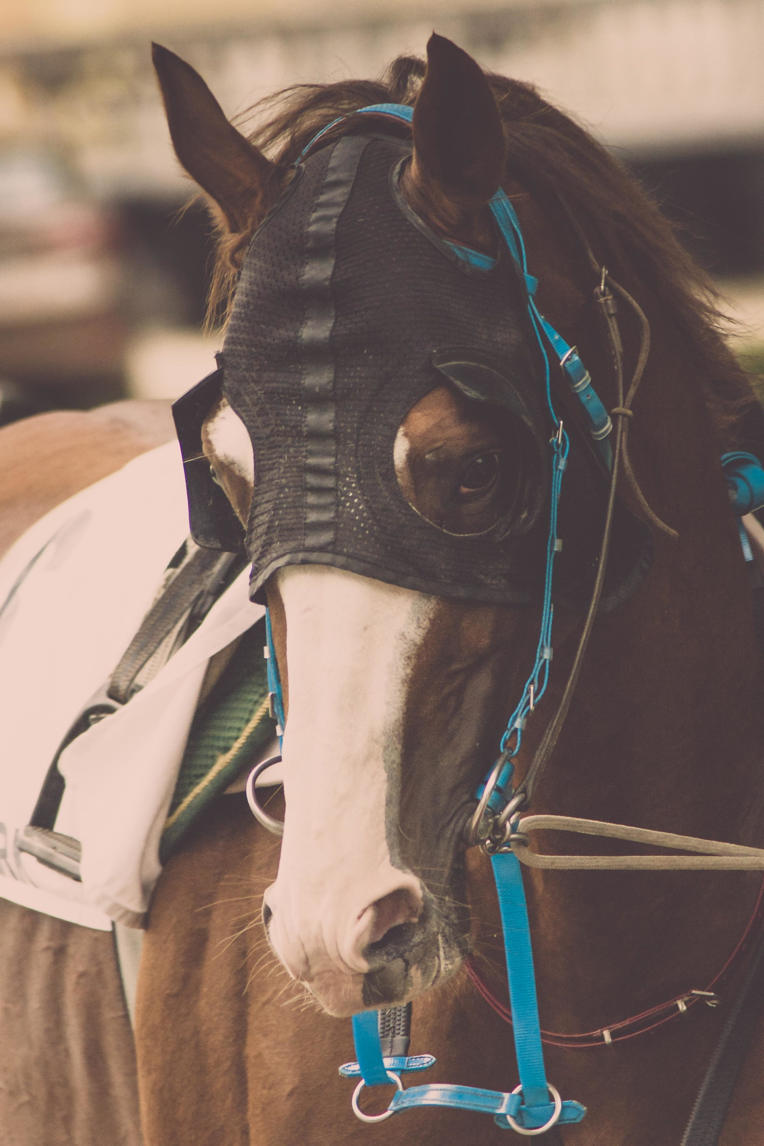 liability horse accident